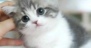 عکس گربه ملوس